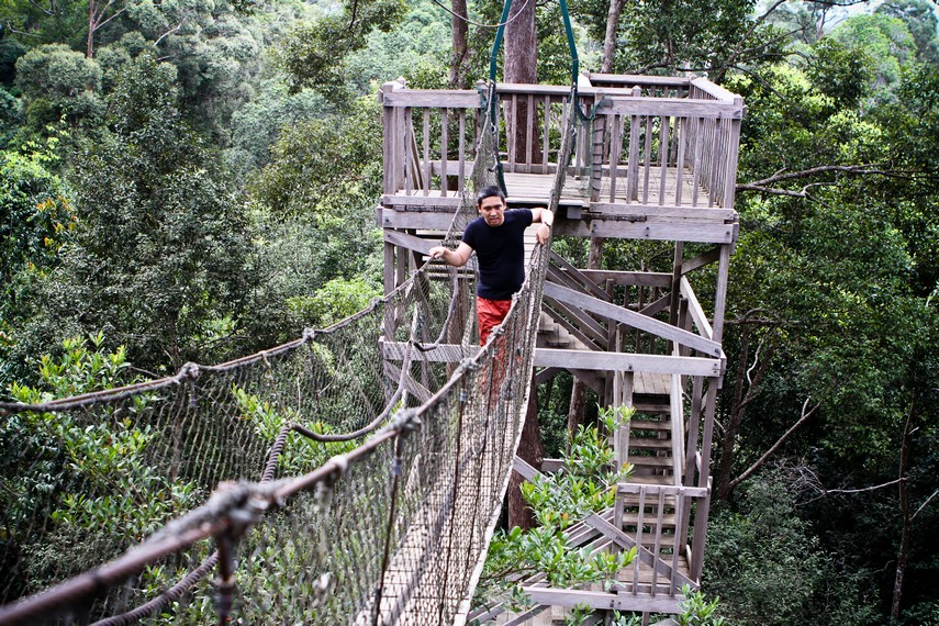 Melintasi canopy bridge